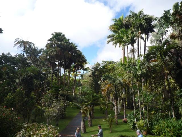 (972) Le jardin botanique de Balata - Martinique P1100738