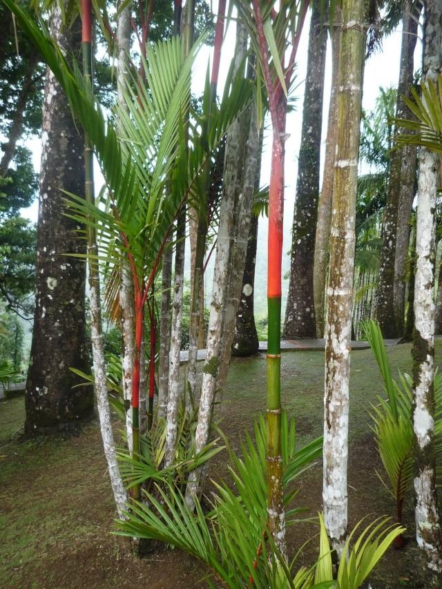 (972) Le jardin botanique de Balata - Martinique P1100739