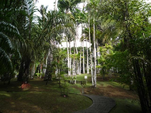 (972) Le jardin botanique de Balata - Martinique P1100741