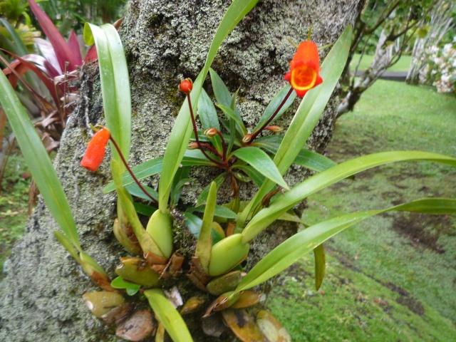 (972) Le jardin botanique de Balata - Martinique - Page 2 P1100750