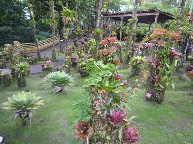 (972) Le jardin botanique de Balata - Martinique - Page 2 P1100751