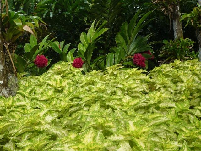 (972) Le jardin botanique de Balata - Martinique - Page 2 P1100758
