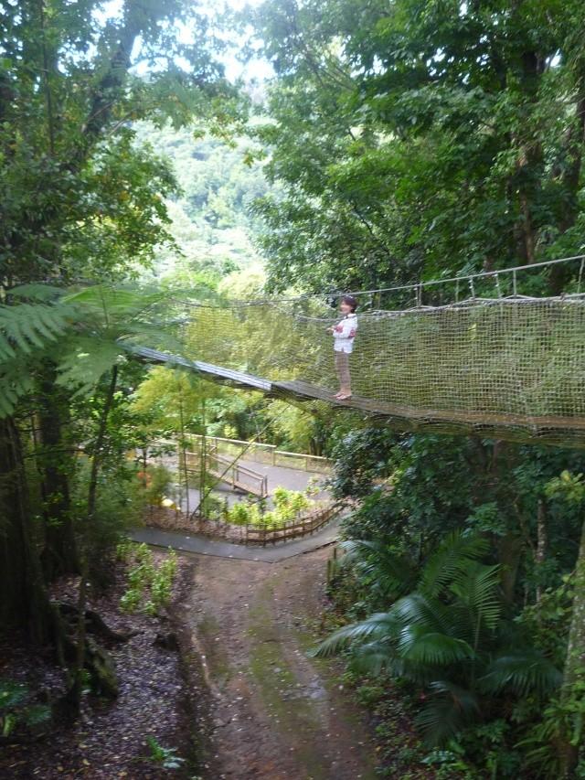 (972) Le jardin botanique de Balata - Martinique - Page 2 P1100766