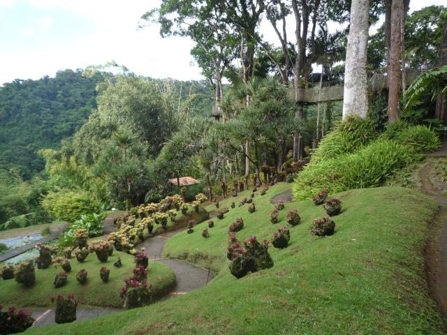 (972) Le jardin botanique de Balata - Martinique - Page 2 P1100767