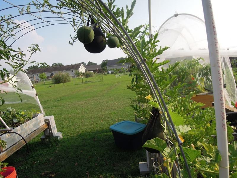 Trellis height for tomato, cukes, etc...? Dscn0810