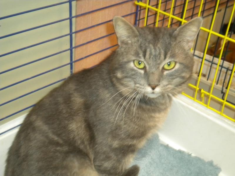 MISTIGRI ( chat mâle tigré gris) Sss_0010
