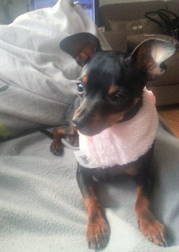 hello! c'est moi Lola  20121013