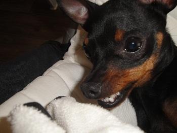 hello! c'est moi Lola  Dsc01012