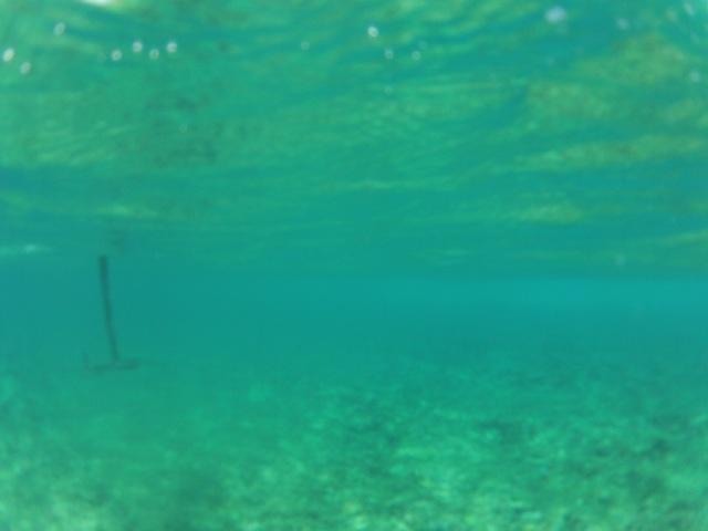 Petite session au Reef Gopr3817