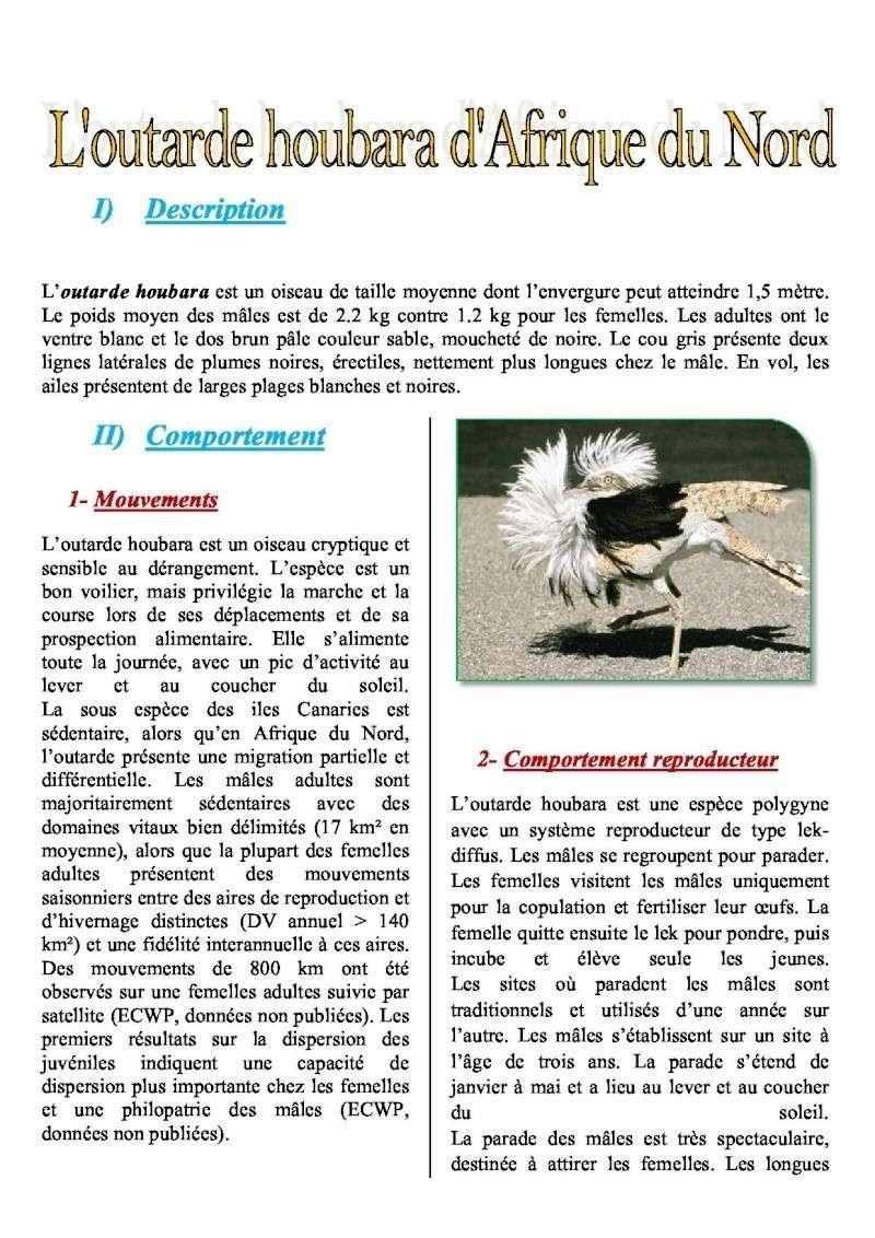 outarde houbara  afrique du nord Outard10