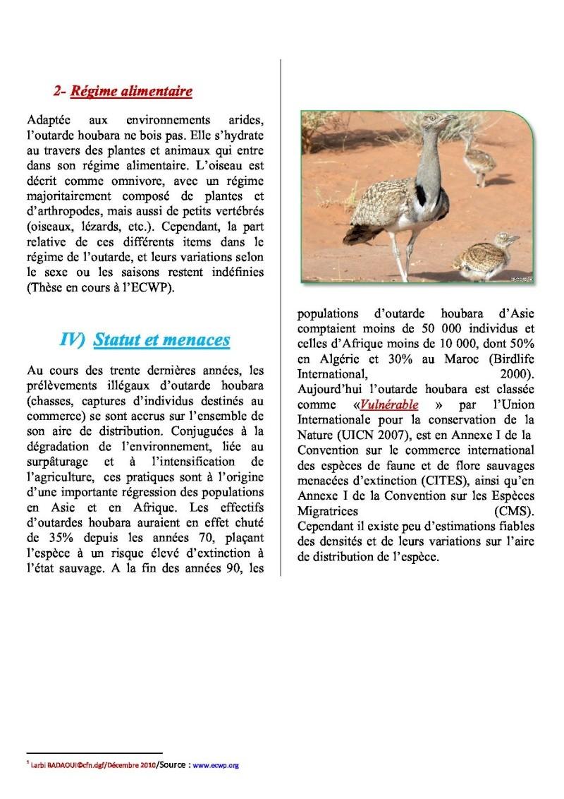 outarde houbara  afrique du nord Outard12