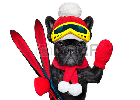 urgent montage chien skieur, merci !! 34692010