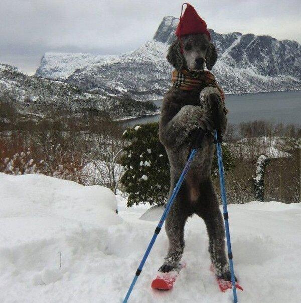 urgent montage chien skieur, merci !! 73-ins10