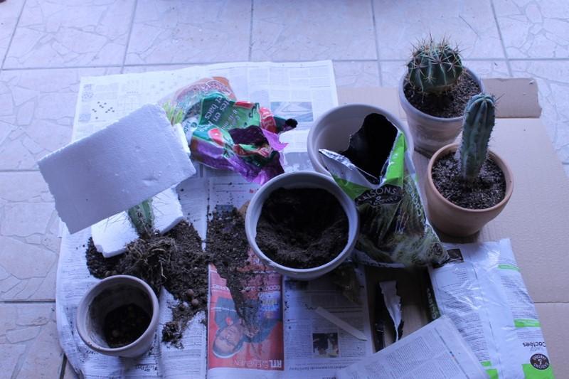 Aujourdui c'est rempotage de mes cactus! :) Img_0818