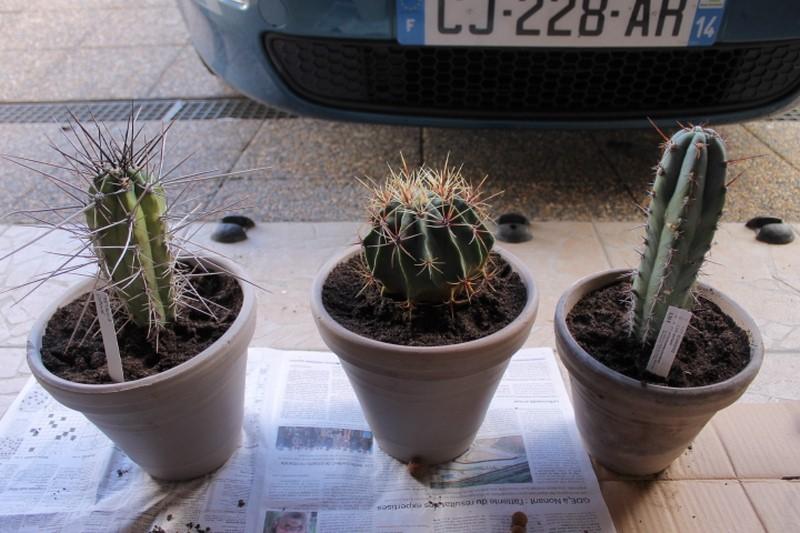 Aujourdui c'est rempotage de mes cactus! :) Img_0828