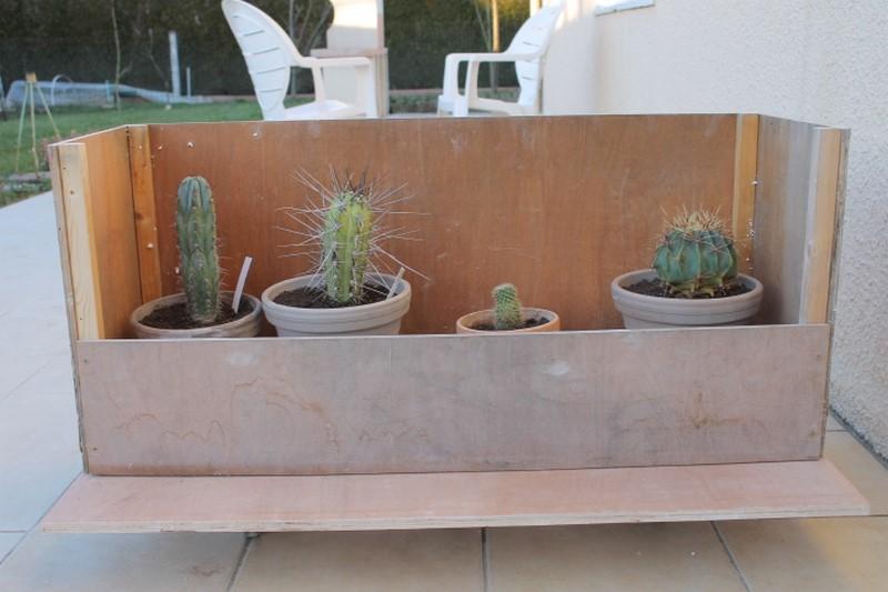 Aujourdui c'est rempotage de mes cactus! :) Img_0910