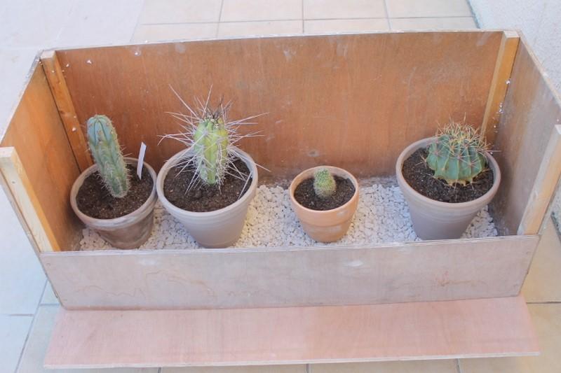 Aujourdui c'est rempotage de mes cactus! :) Img_0911