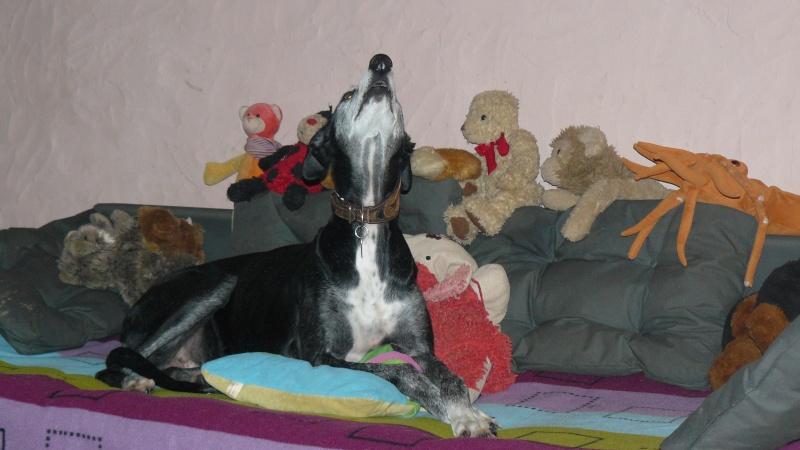 Florence Squelette de Merida à l'adoption  Scooby France    Adoptée  - Page 6 00410