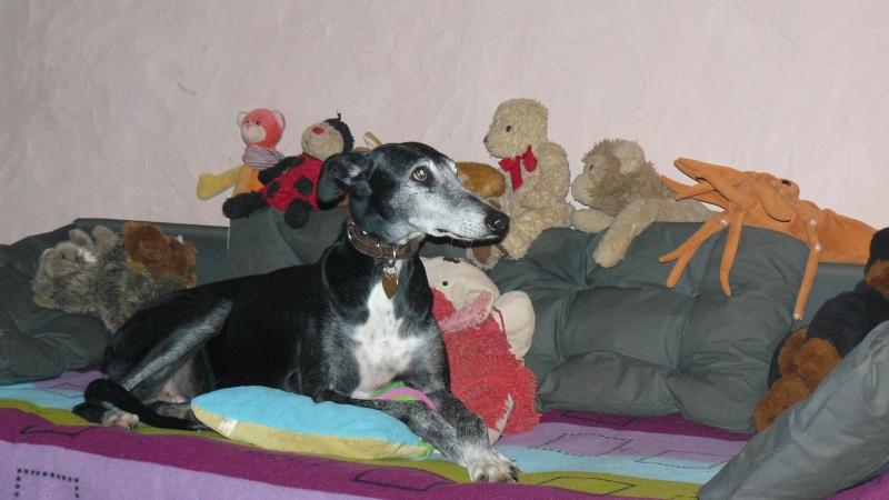 Florence Squelette de Merida à l'adoption  Scooby France    Adoptée  - Page 6 00610