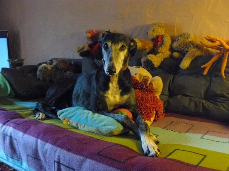 Florence Squelette de Merida à l'adoption  Scooby France    Adoptée  - Page 6 03010