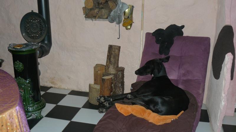 Florence Squelette de Merida à l'adoption  Scooby France    Adoptée  - Page 6 05810