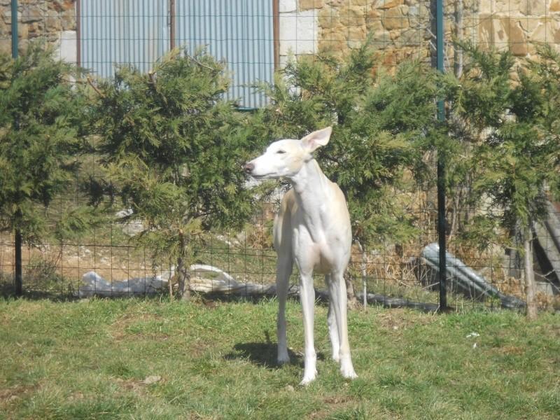Florence Squelette de Merida à l'adoption  Scooby France    Adoptée  - Page 6 Dscn2510