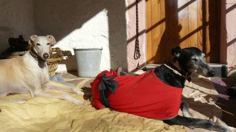 Florence Squelette de Merida à l'adoption  Scooby France    Adoptée  - Page 4 P1080910