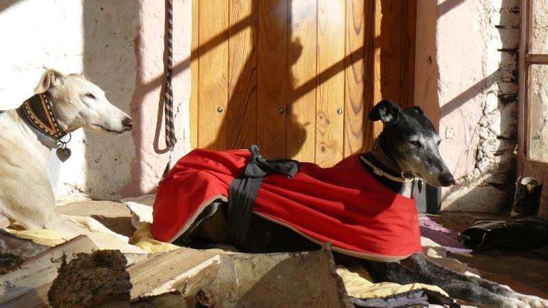 Florence Squelette de Merida à l'adoption  Scooby France    Adoptée  - Page 4 P1090012