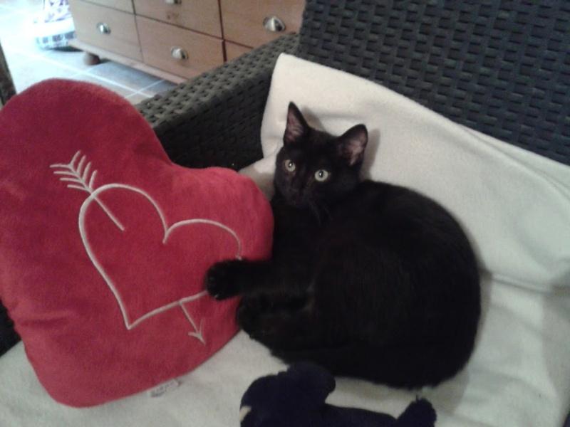 BAGDAD (chaton mâle noir) Amour_10