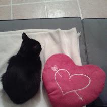 BAGDAD (chaton mâle noir) Chaton10