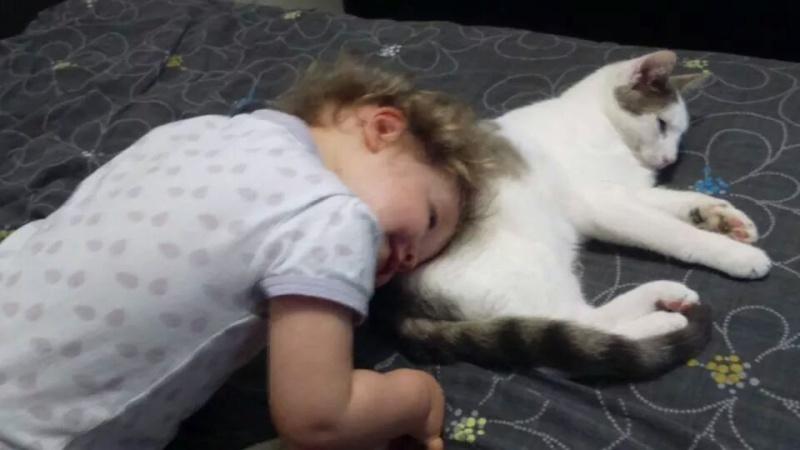 ASTUCE (chaton mâle)gris et blanc réservé Img_2210