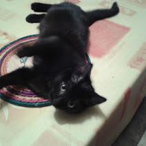 BAGDAD (chaton mâle noir) Moka_s10