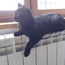 BAGDAD (chaton mâle noir) Moka_s11