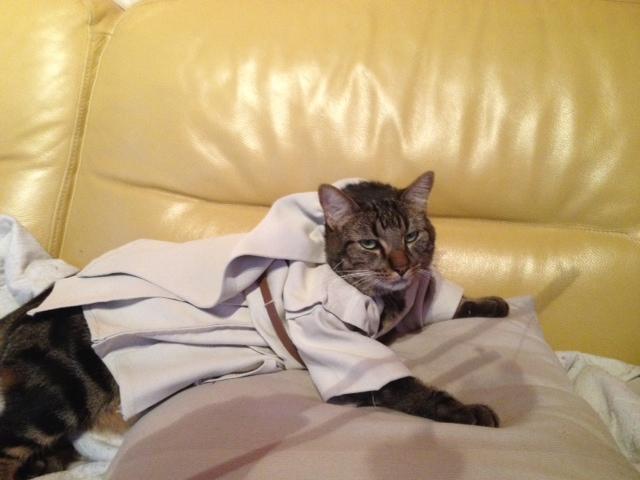 BELEY (chaton mâle tigré) réservé Photo10