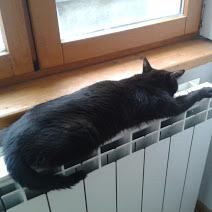 BAGDAD (chaton mâle noir) Repos_10