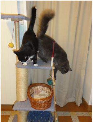 Photos de chats petits et que Chats_10