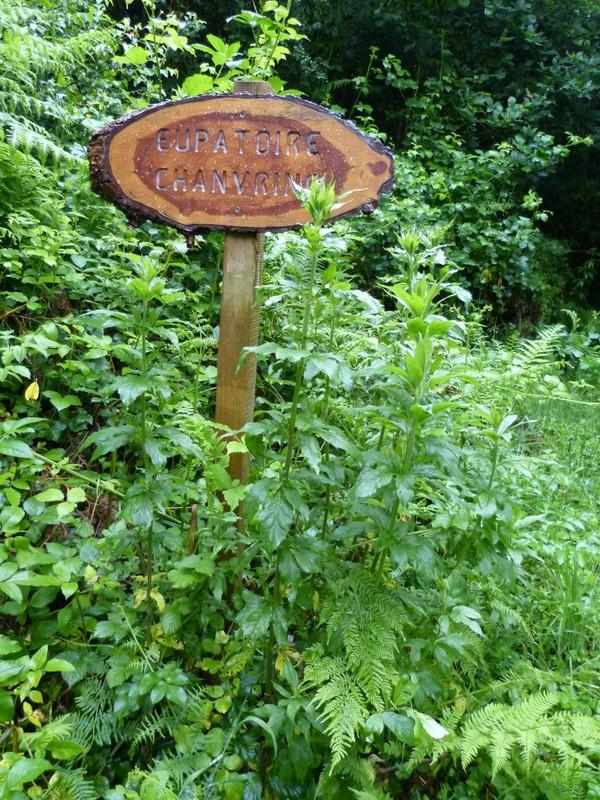 un sentier botanique près de BRASPARTS Eupato10