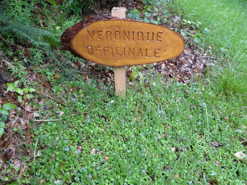 un sentier botanique près de BRASPARTS Veroni12