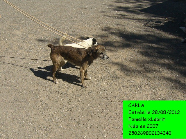 CARLA xLabrit 250269802134340 en CA le 19/09/2012 Carla110