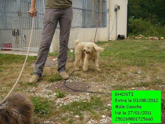 GHOSTI Caniche abricot 250269801725660 P1130412