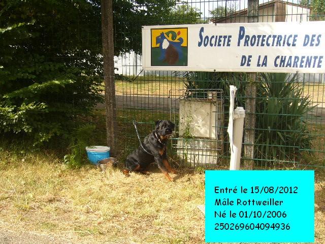 PRINCE Rottweiller 250269604094936 P1130526