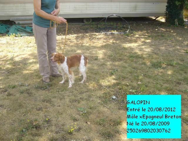 GALOPIN xEpagneul Breton 250269802030762 P1130618