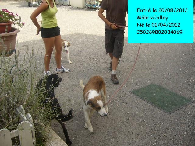 HELIOS xColley 250269802034069 P1130626