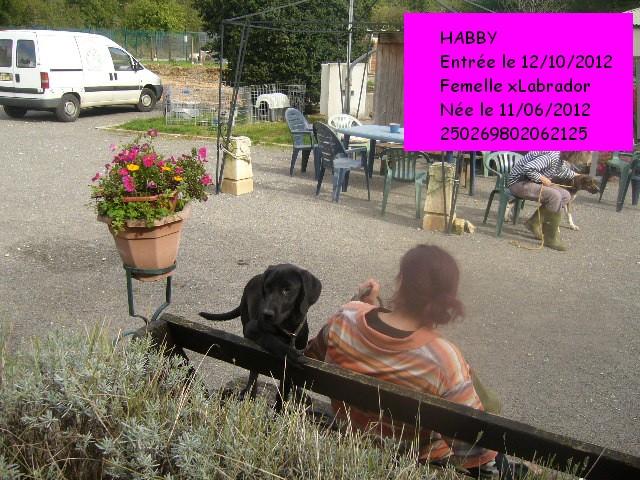 HABBY xLabrador noire 250269802062125 P1140123