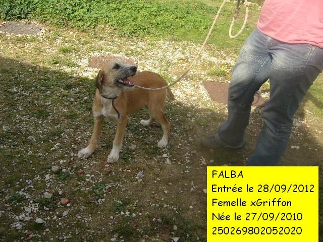 FALBA xGriffon fauve/blanc 250269802052020 Photo_42