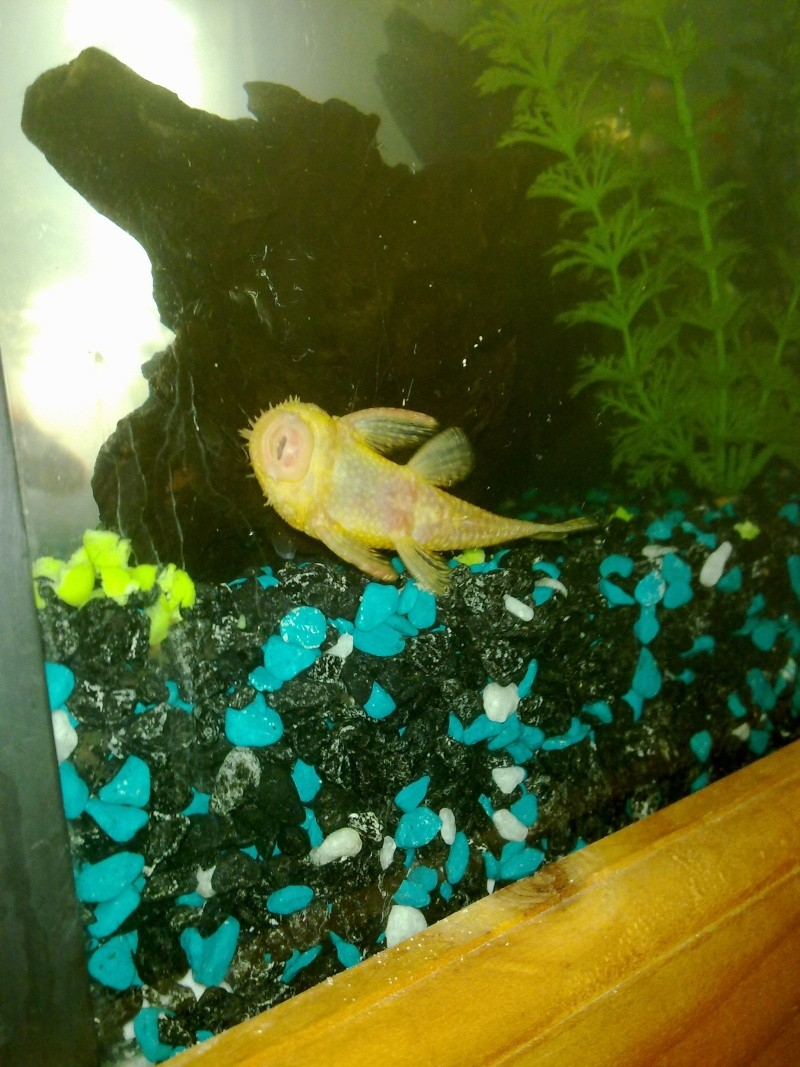 My Albino  14012010