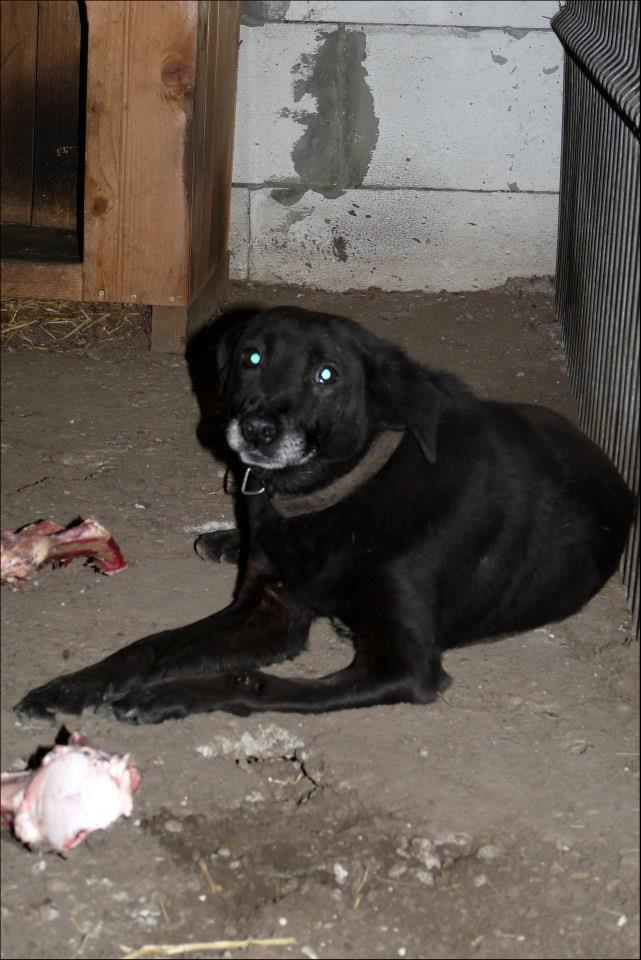 BLACHI, ratier, né en 2004 PARRAINE PAR LAIRO - FB - LBC- SOS -SC- AS Blachi10