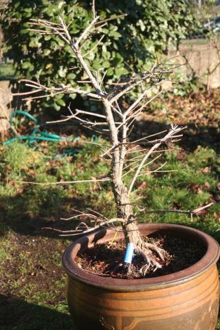 Nouveaux plants Landais Img_2211