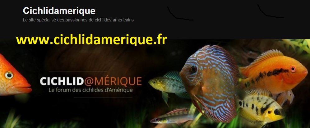 mon aquarium AMC ( 1000L ) Banniz10