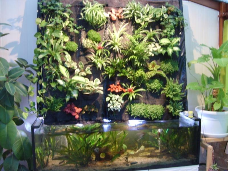 mur végétal+aquarium 10-lai10
